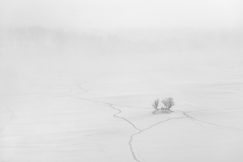 пейзаж, природа, лед, снег, туман, снегопад, тропа, дерево, куст, тропинки, река, зима, красноярск, енисей, татышев, чб, черно-белая, минимализм, Где дорога, а где мелкая тропа...photo preview