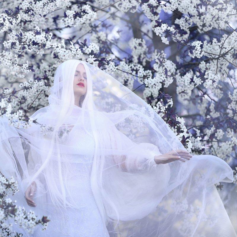 сиреневый, цветение, цветущая вишня, белая вуаль, белый, цветущий сад photo preview
