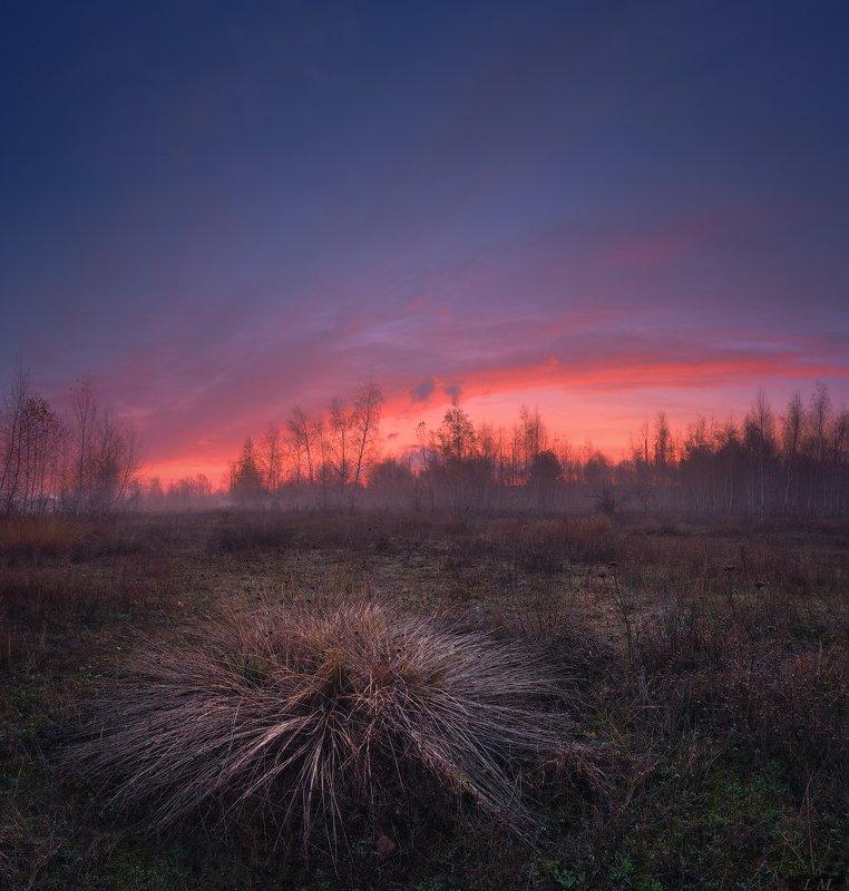 рассвет, утро, осень, ноябрь, туман, небо, луг, облака, свет, пейзаж, autumn, dawn, sunrise, morning, meadow, november, landscape, photography, red, clouds, light, sky, fog ***photo preview
