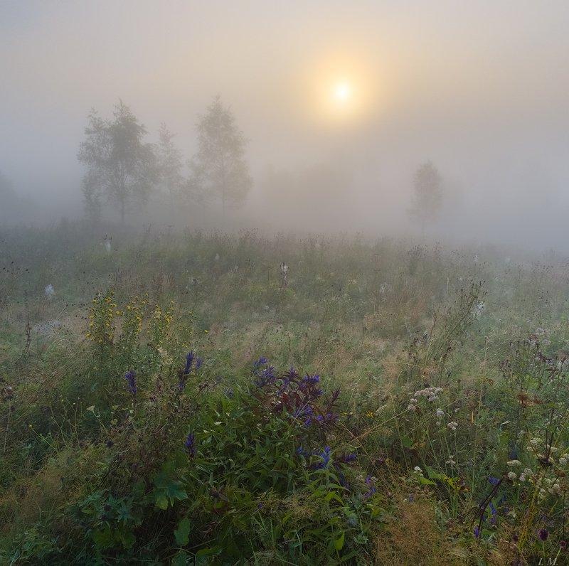 лето, утро, туман, рассвет, роса, солнце, луг, Прикарпатье, пейзаж, foggy, morning, summer, landscape, dawn, sunrise, sun, misty ***photo preview