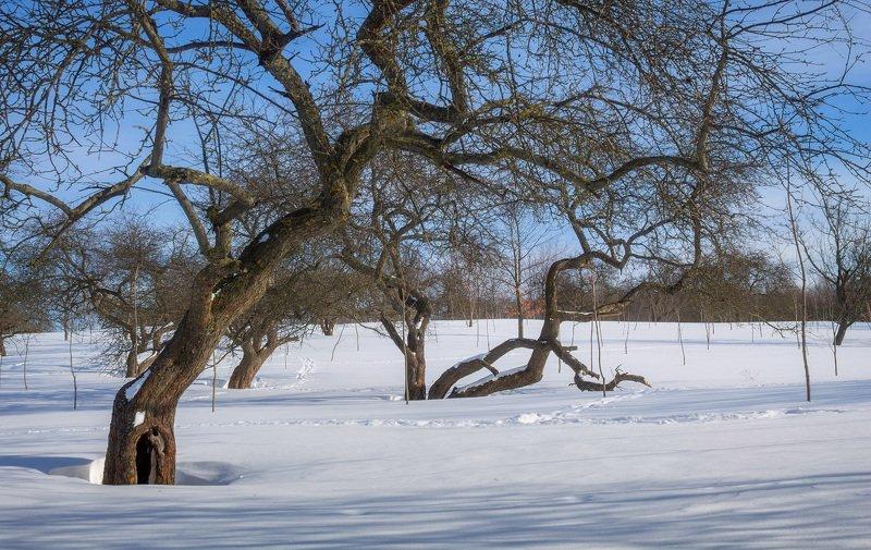 снег, день, зима, мороз, Зимаphoto preview