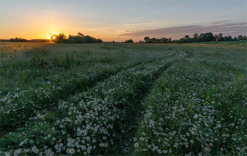 рассвет в ромашковых полях...photo preview