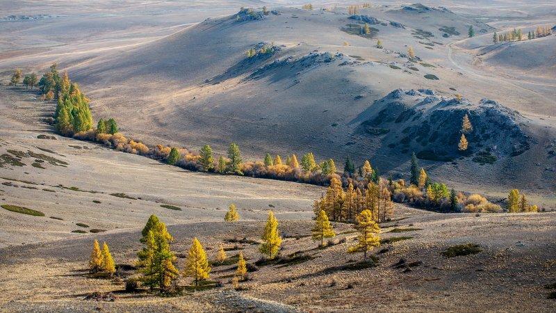 горы,алтай,горный алтай, ник васильев,красота, утро,кусты, деревья, свет, каратюргун Осенние линии.photo preview