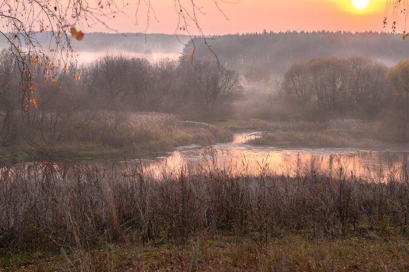 пейзаж,природа,россия,осень,золотая осень,туман \