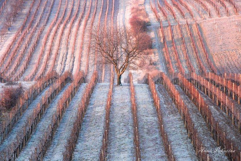 Розово-голубое утро Южной Моравииphoto preview