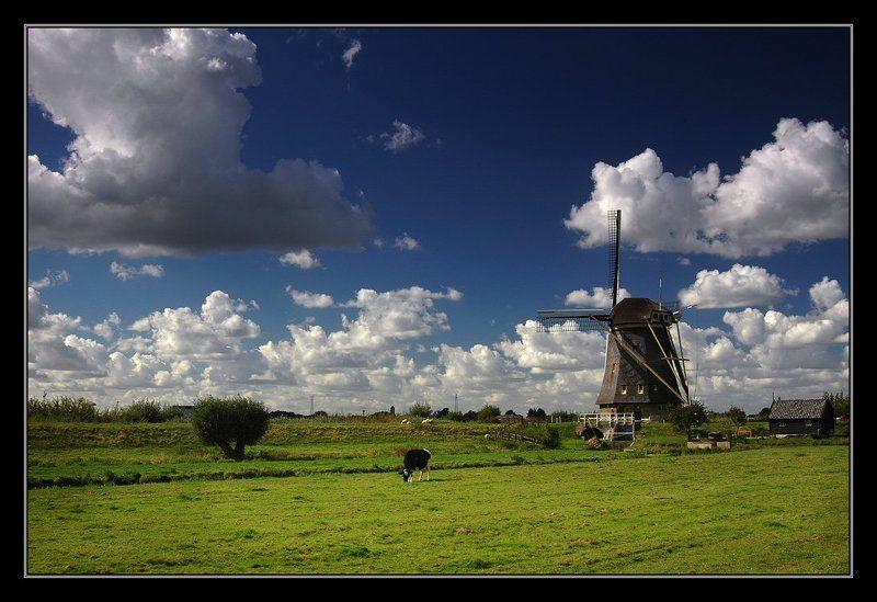 О тяжелой жизни голландских коровphoto preview