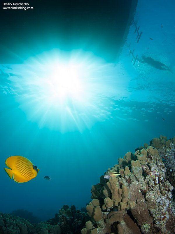 красное море,butterfly,рыба бабочка,underwater ***photo preview