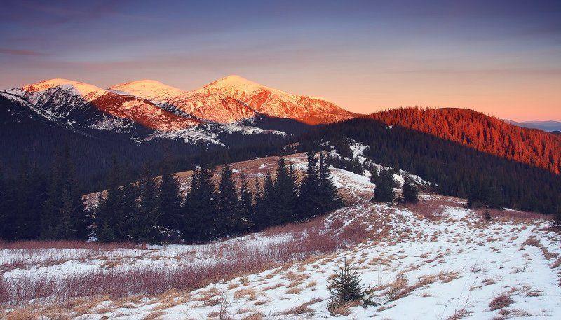 карпаты, горы, , украина, черногора, снег, говерла, утро Первый снегphoto preview