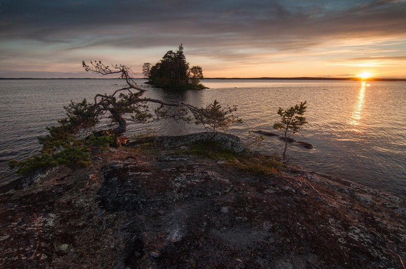 карелия, остров, сосна, закат, озеро На семи ветрахphoto preview