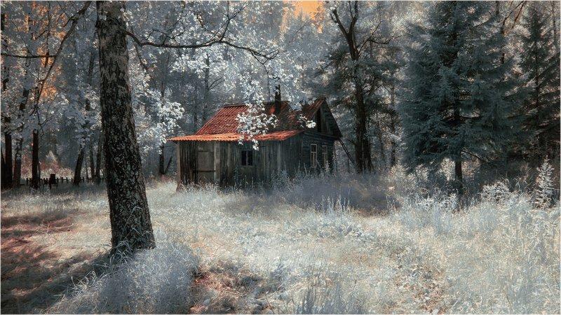 лето, лес, дом, глухомань Домик-боровик)photo preview