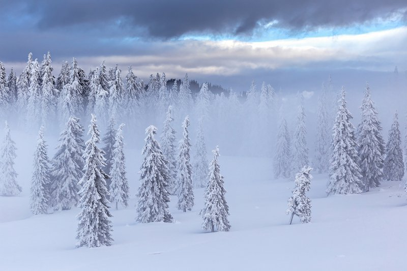 winter, trees, blizzard, snow, landscape, travel, nature, mountain, romania, cold, fog The Sharpness of Winterphoto preview