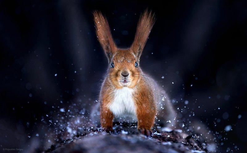 белка, снег, зима ***photo preview