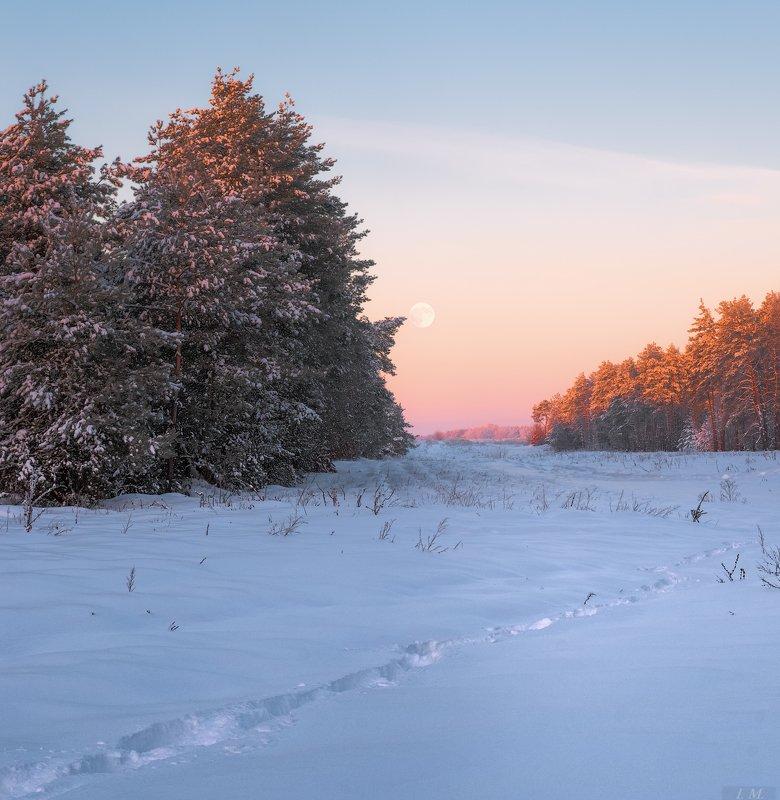 зима, лес, луна, мороз, пейзаж, снег, сосны, Утро, морозное утро, frost, pine, trees, forest, Landscape, light, moon, morning, snow, winter Былые зимы ...photo preview