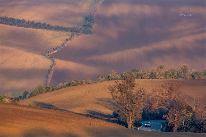 южная моравия,пейзаж,карлинские волны,линии,south moravian,lines,свет,czech,осень,чехия,landscapes,поле, Свет и тени Южной Моравииphoto preview