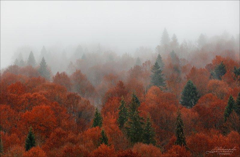 румыния Осенний коверphoto preview
