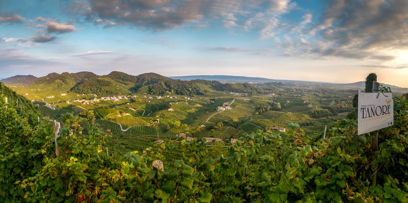 italy, landcape, wine, Land of Winephoto preview