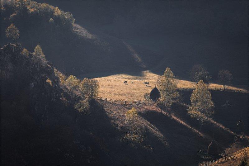 Утренний свет карпатской долиныphoto preview