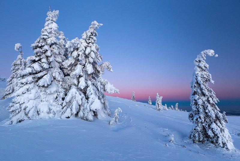 winter, trees, blizzard, snow, landscape, travel, nature, mountain, romania, cold, sunrise Renegadephoto preview