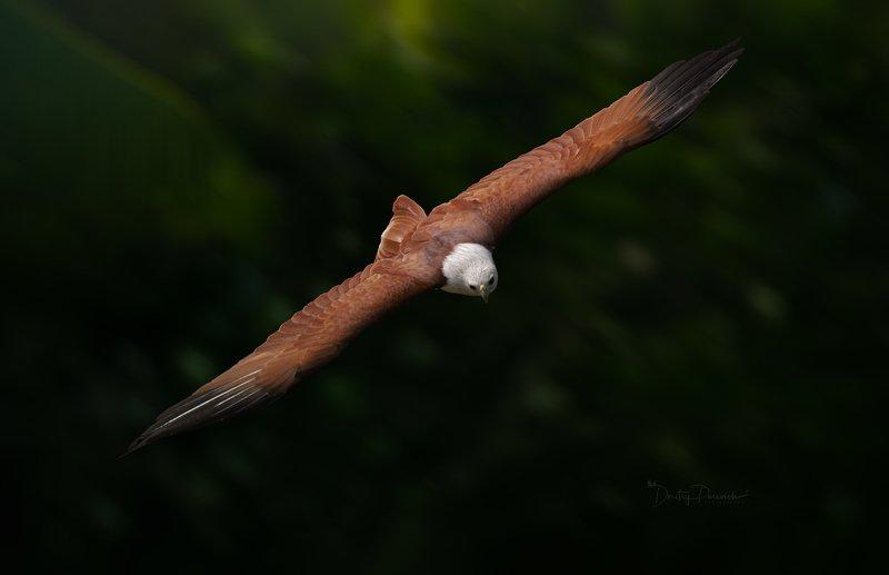 природа, животные, птицы, вьетнам, остров фукок Виражphoto preview