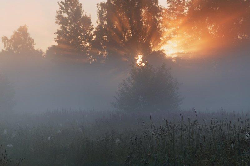 природа, рассвет, пейзаж, туман, ленобласть photo preview
