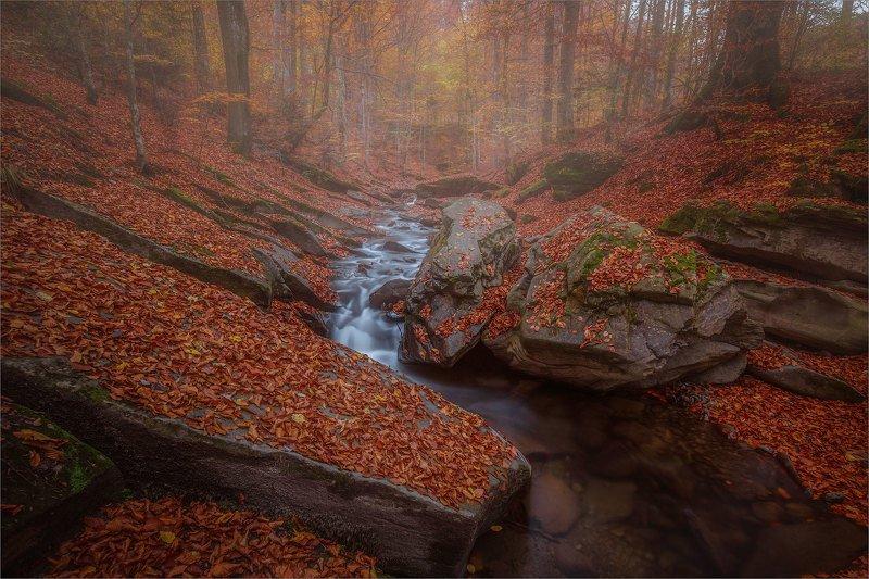 В Буковом лесуphoto preview
