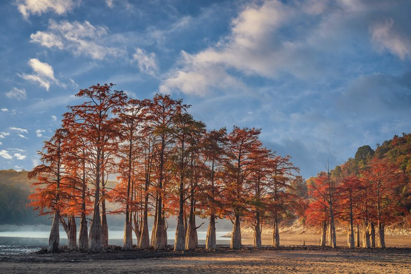 болотные кипарисы, озеро сукко, осень, Болотные Кипарисы на озере Суккоphoto preview