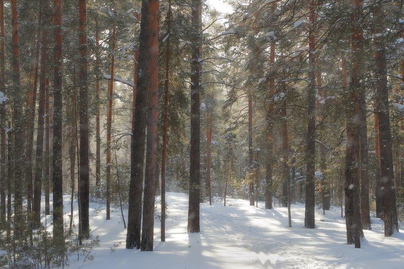 солнце ветер снег зима Завьюжило в зимнем лесуphoto preview