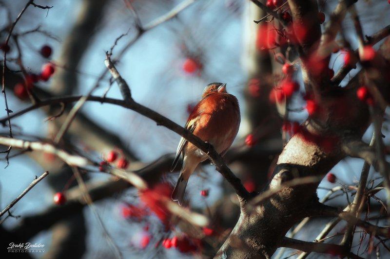 bird, animal, outdoor, nature, colors, bokeh, canon, photography Dinner timephoto preview