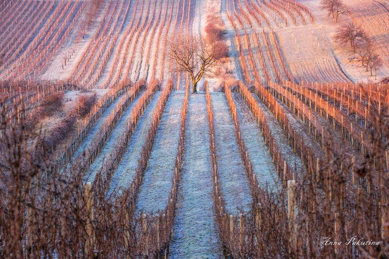 Сказочное утро (Moravia)photo preview