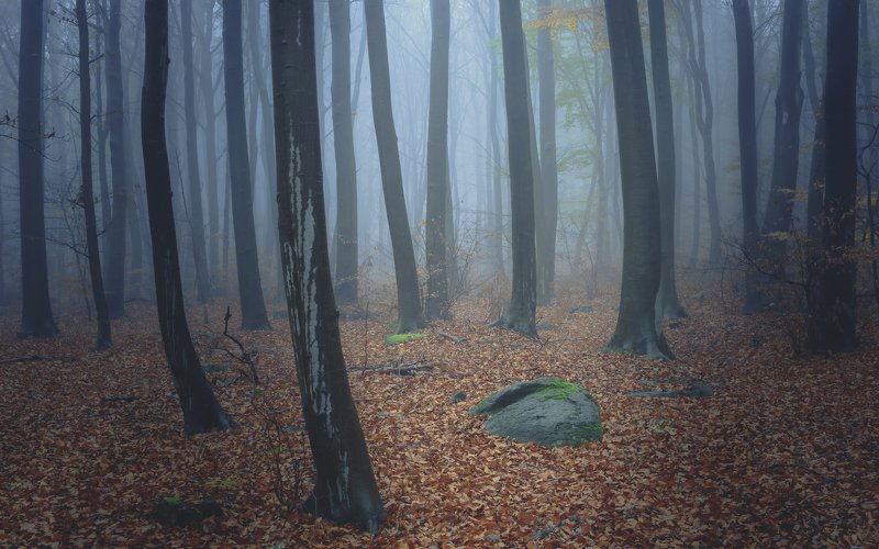 forest, rain, green, trees, autumn, fog, misty Mystical forestphoto preview
