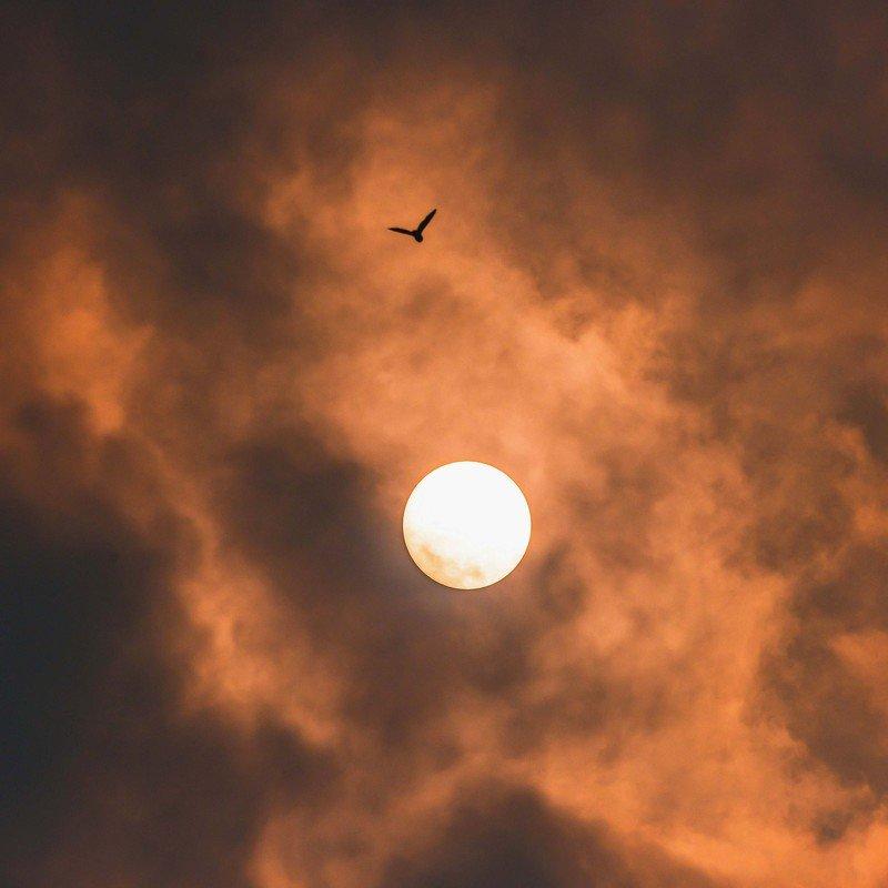 икар - победитель высоты, герой греческих мифов, слишком близко подлетевший к солнцу. Икар.photo preview