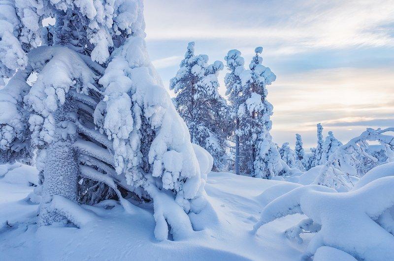 заполярье, гора, снег, ели, волосная ...photo preview