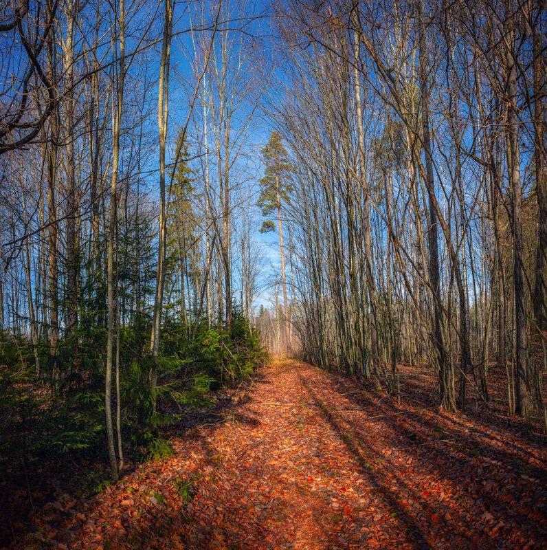 лес, осень, дорога, небо, Поздняя осеньphoto preview