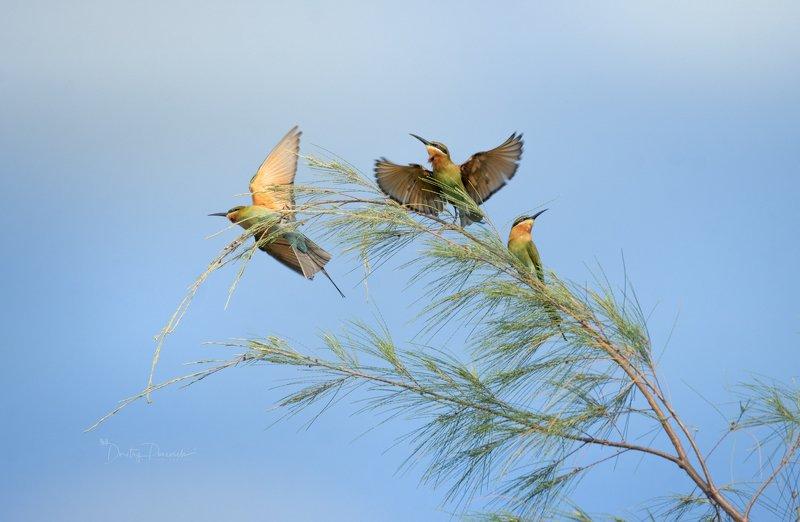 природа, животные, птицы, вьетнам, остров фукок Щуркино утроphoto preview