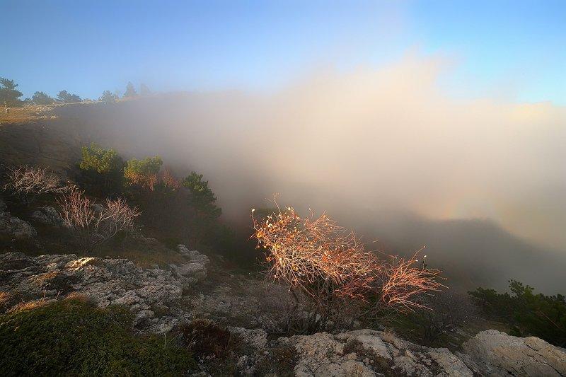 крым, горы, осень, ай-петри, сосны, туман Туман на Ай-Петриphoto preview