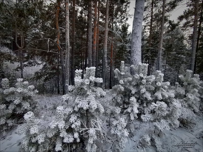 забайкальский край Изморозьphoto preview