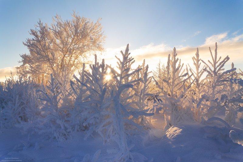 солнце, россия, рассвет, природа, подмосковье, погода, пейзажи, пейзаж, отражение, наукоград, красота, дубна, вода, весна, weather, water, spring, russia, reflection, naukograd, nature, moscow, landscape, dawn, canon, dubna, beauty Ах, иней, иней.photo preview