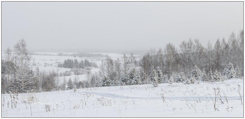 Белая и пушистая.photo preview