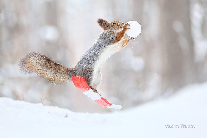 белка, сноуборд, снежок, squirrel Freestylephoto preview