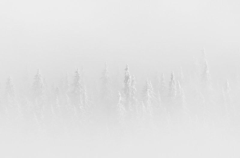 winter, trees, blizzard, snow, landscape, travel, nature, mountain, romania, cold Symbiossisphoto preview