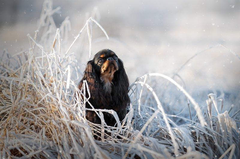 Почти зима:))))photo preview