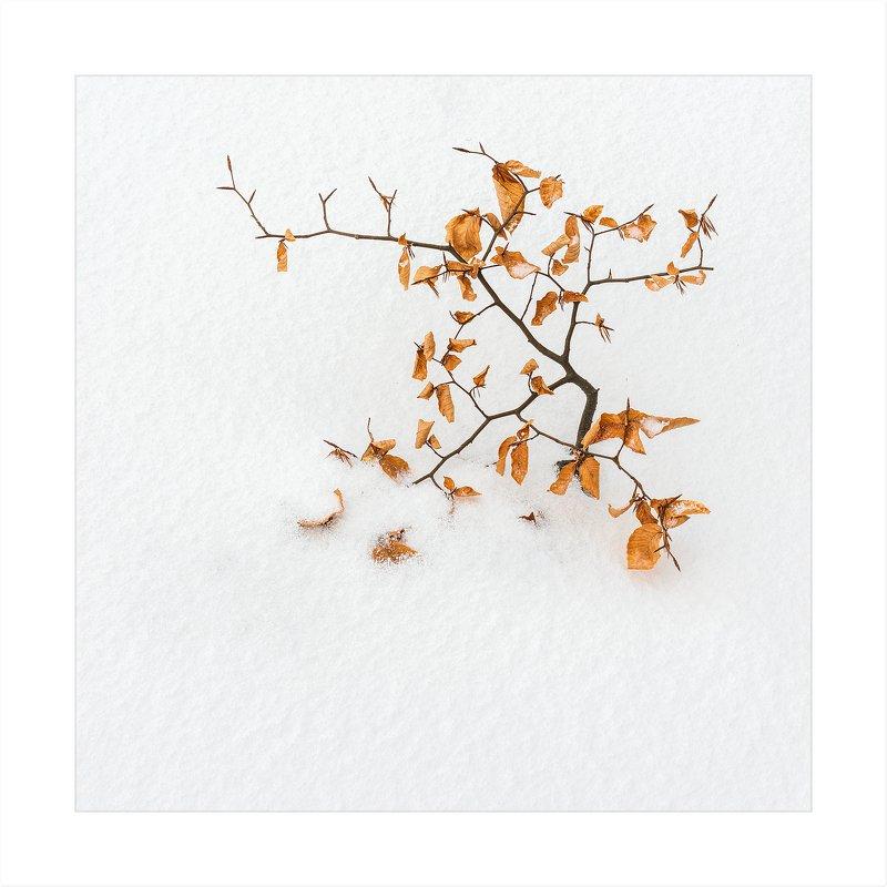 Весна, лето, осень, зима.. и снова весна