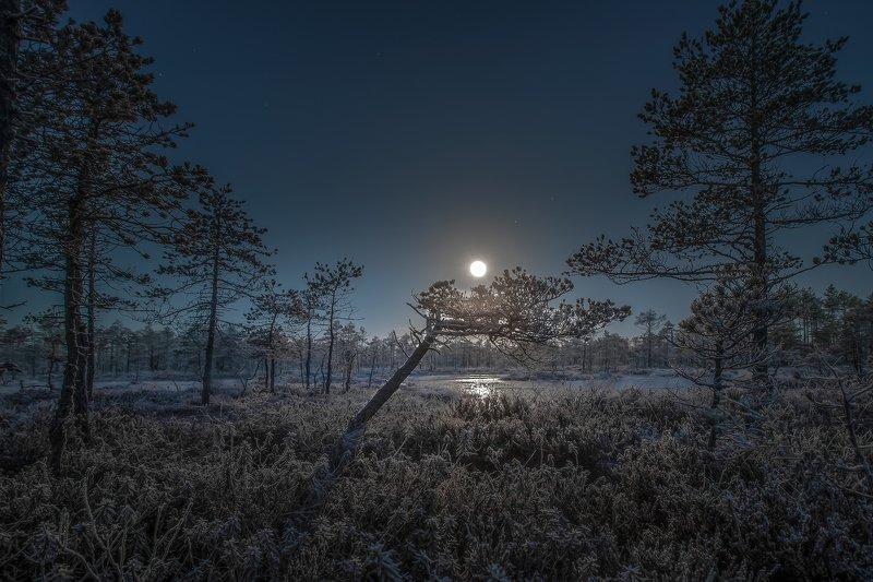 полнолуние на болоте Ленинградская областьphoto preview