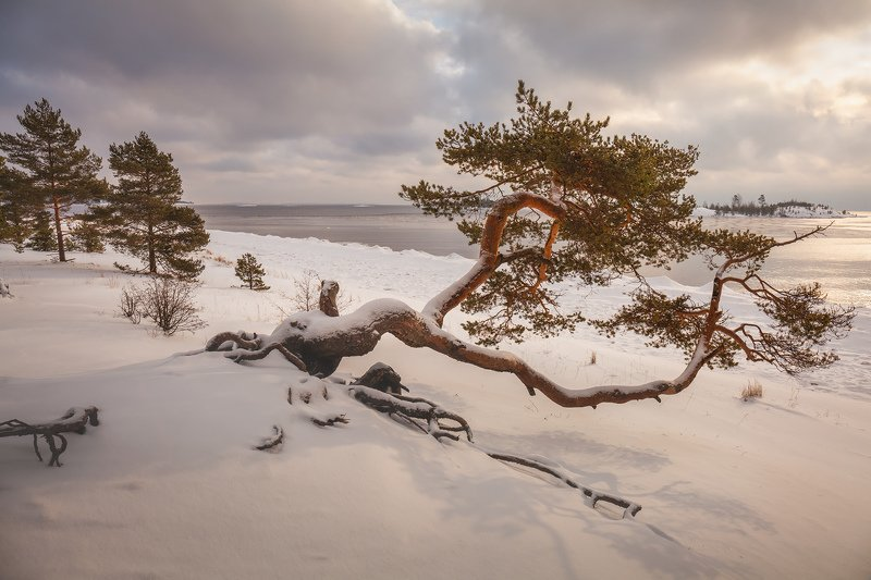 Ладожские шхеры зимой, зимняя Ладога, Карелия, сосна \