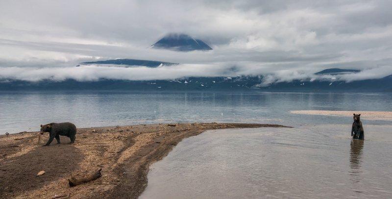 камчатка, курильское озеро Камчатка. Медведи Курильского озера.photo preview