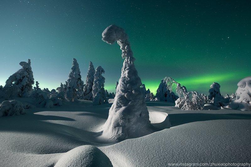 Одинокий снежный монстрphoto preview
