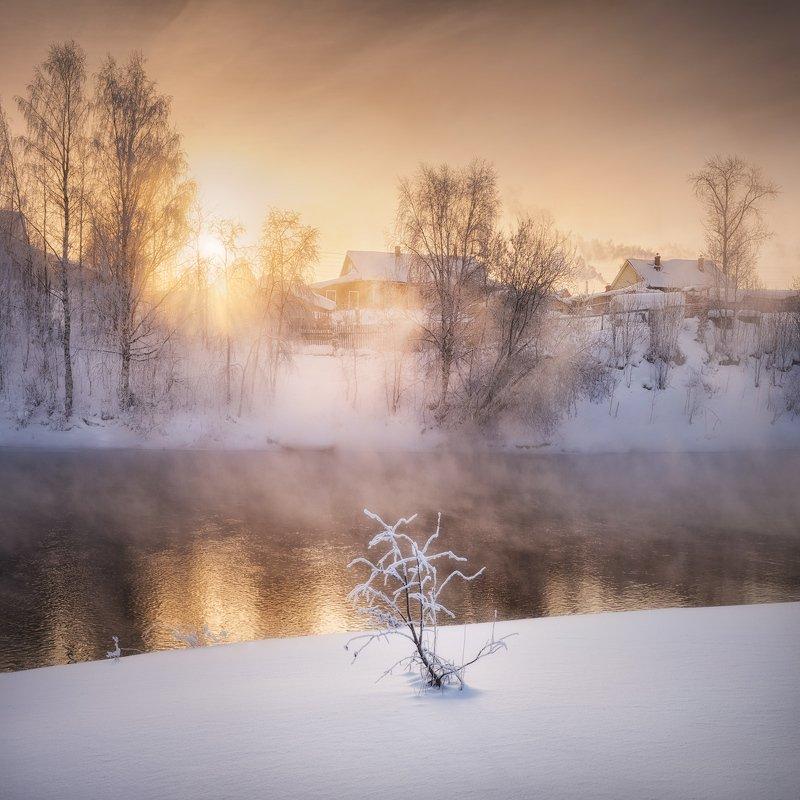 зима, холод, туман Прибрежный бансайphoto preview