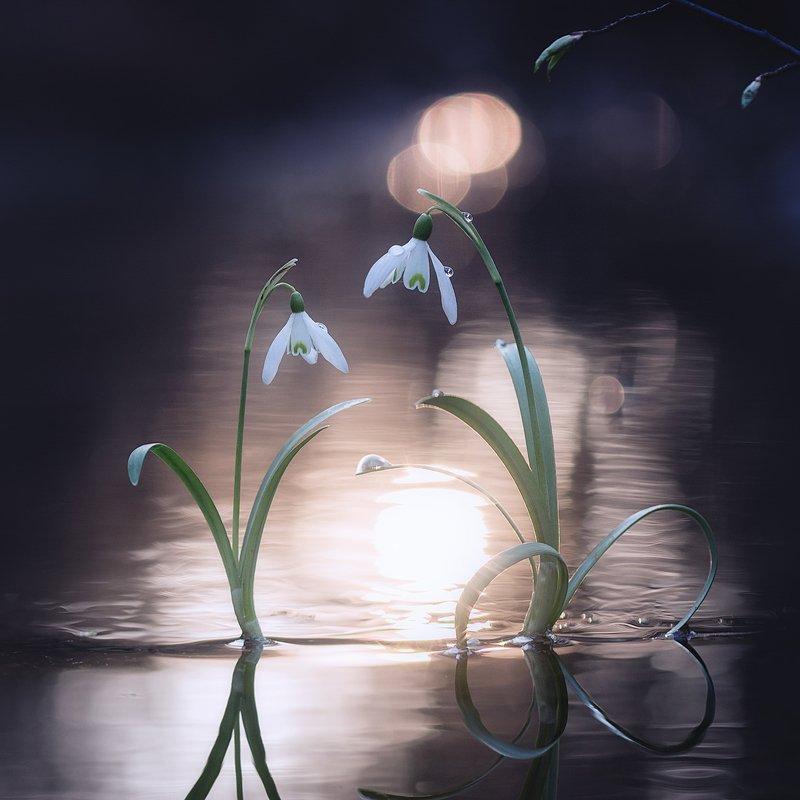 украина, коростышев, макро, макро мир, весна, трогательно, нежность, двое, макро красота, волшебство, сказка, следы, ножки, сердце, любовь, зеленый, фон, жизнь, мечта, макро истории, гармония, фотограф, чорный, \