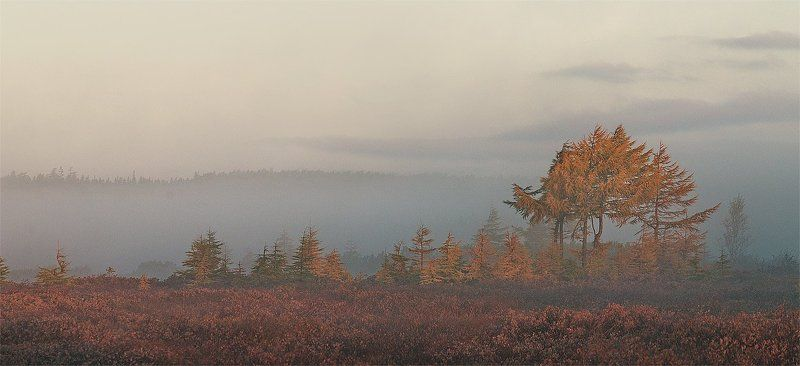 туман, утро \
