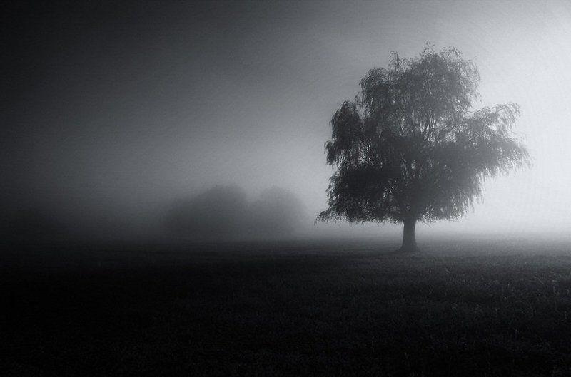 туман , дерево , поле , свет Пробуждение...photo preview